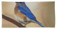Eastern Blue Bird Male Beach Sheet