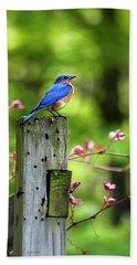 Eastern Bluebird Beach Sheet