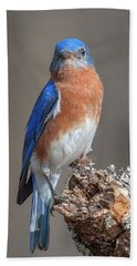Eastern Bluebird Dsb0300 Beach Towel