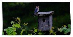 Eastern Bluebird In The Rain Beach Towel
