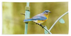 Eastern Bluebird Beach Towel