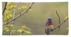 Eastern Bluebird Beach Towel by Living Color Photography Lorraine Lynch