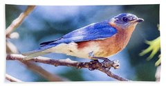 Eastern Bluebird Beach Sheet