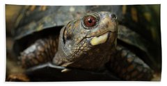 Eastern Box Turtle 4 Beach Towel by Mike Eingle