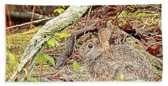 Beach Towel featuring the digital art Eastern Cottontail Rabbit by Kristia Adams