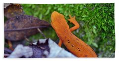 Eastern Newt Beach Towel