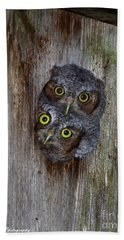 Eastern Screech Owl Chicks Beach Towel