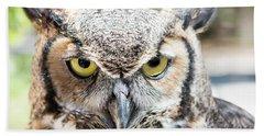 Eastern Screech Owl Portrait Beach Towel