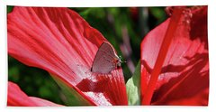 Eastern Tailed Blue Butterfly On Red Flower Beach Sheet by Inspirational Photo Creations Audrey Woods