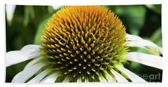 Beach Towel featuring the photograph Echinacea - Head And Shoulders by Wendy Wilton
