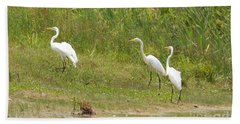 Beach Towel featuring the photograph Egret Family 1 by Maria Urso