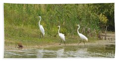 Beach Sheet featuring the photograph Egret Family 2 by Maria Urso