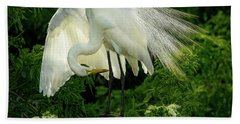 Egret Preening Beach Sheet