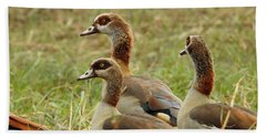 Beach Towel featuring the photograph Egyptian Geese by Betty-Anne McDonald