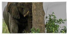 Elephant  1 Beach Towel