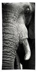 Elephant Close-up Portrait Beach Sheet