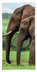 Elephant Couple Profile Beach Sheet