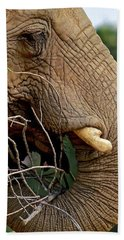 Elephant Curl Beach Towel
