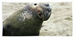 Beach Towel featuring the photograph Elephant Seal by Anthony Jones