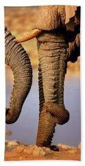 Elephant Trunks Interacting Close-up Beach Towel