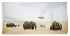 Elephants Grazing In Kenya Africa Beach Sheet