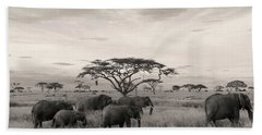 Beach Towel featuring the photograph Elephants by Stefano Buonamici