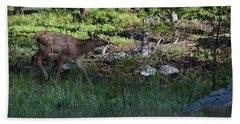 Baby Elk Rmnp Co Beach Towel