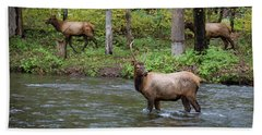 Elks By The Stream Beach Towel