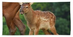 Elk Calf Arrives Beach Towel by Alan Lenk