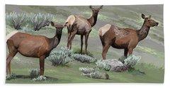 Elk Cows Trio Beach Towel