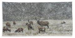 Elk Harem In Falling Snow Beach Sheet