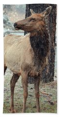 Elk In The Snow Beach Sheet by Debby Pueschel