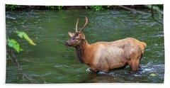Elk In The Stream 2 Beach Sheet