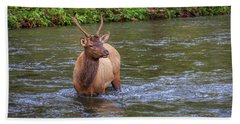Elk In The Stream 3 Beach Towel