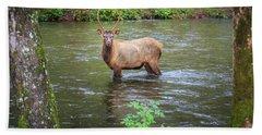 Elk In The Stream Beach Towel