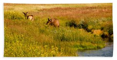 Beach Towel featuring the photograph Elk In The Wild Flowers by Cathy Donohoue