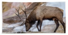 Elk In Yellowstone Beach Towel