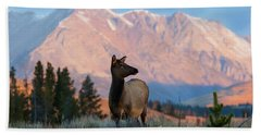 Elk Majesty Beach Towel