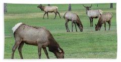 Elk On Golf Course Estes Park Colorado Beach Towel