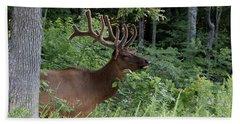Elk Portrait Beach Sheet