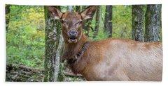 Elk In The Woods 2 Beach Towel