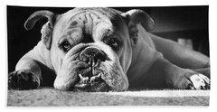 English Bulldog Beach Sheet