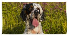 English Setter In Late Summer Beach Towel