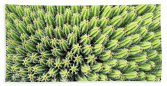 Euphorbia Beach Towel by Delphimages Photo Creations
