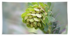 Beach Towel featuring the photograph Euphorbia by Linda Lees