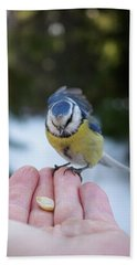 Eurasian Blue Tit Lunch Time Beach Towel