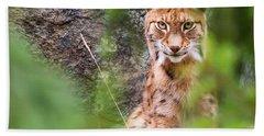 Eurasian Lynx Beach Towel