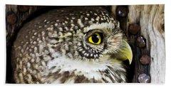 Eurasian Pygmy Owl In Profile Beach Towel