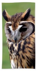 Eurasian Striped  Owl Beach Towel by Stephen Melia