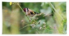 European Goldfinch Perched On Flower Stem B Beach Towel